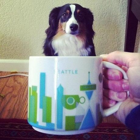 Top 10 Images of Big Dogs in Cups