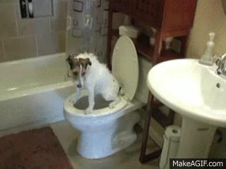 Dog Using the Toilet
