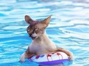 Pictures Cats Swimming