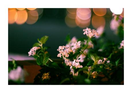 tank-bund-flowers-closeup-harsha-photo