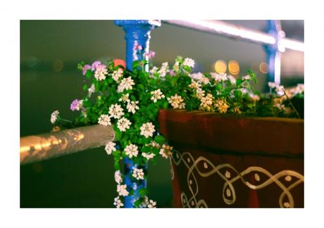 flowers-tankbund-harsha-photo