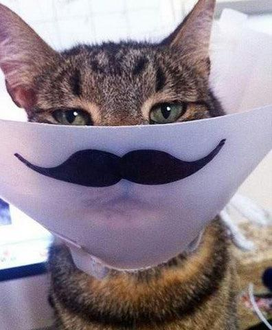 Cat with a Moustache