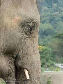 An Ethical Elephant Encounter in Thailand