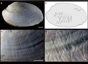 Dubois' shell, including close-ups of the engravings