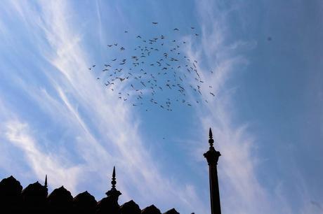 harsha_photography_delhi_jama_masjid_birds