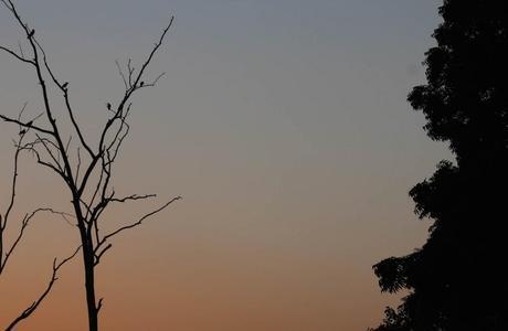 harsha_photo_birds_delhi