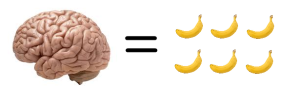 The human brain requires a lot of food anyway