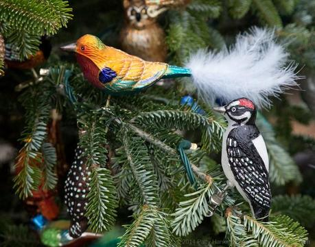 Birds on the Kitchen Garden Tree at Longwood Gardens © 2014 Patty Hankins