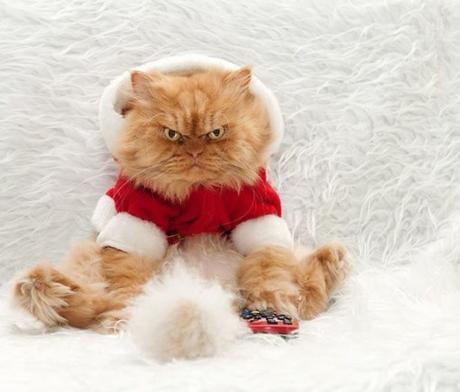 Top 10 Cats Who Hate Christmas
