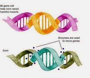 good thesis for genetic engineering Download thesis statement on genetic engineering in our database or order an original thesis paper that will be written by one of our staff writers and delivered according to the deadline.