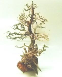 bonsai-driftwood2