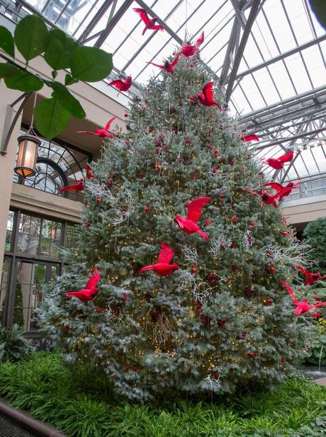 Cardinal Tree in the Conservatory © 2014 Patty Hankins