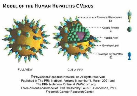 The Skinny on the Hepatitis C Market