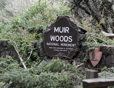 Muir Woods:  California's Tallest Trees