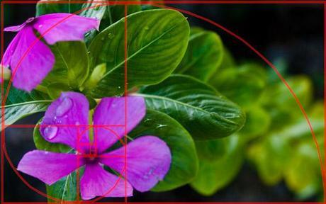 #5 The Golden Rectangle - 8 Effects Every Photographer Should Know About   1stwebdesigner.com via StumbleUpon