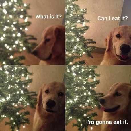 And every dog in every home is angry just because of one very simple reason- You didn't let them eat the christmas tree. So mean, you humans!!!!