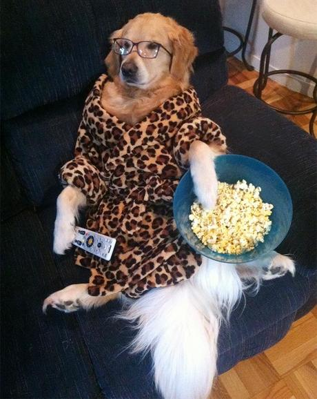 A bowl full of popcorn, favorite flick on the TV, no one at home to bark at! :D This dog certainly knows how to enjoy the Home alone days!!