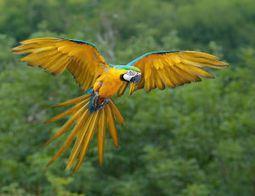 Applaud Efforts to Combat Wildlife Trafficking