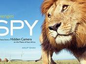 Hidden Cameras Around Africa Capture Amazing Pictures