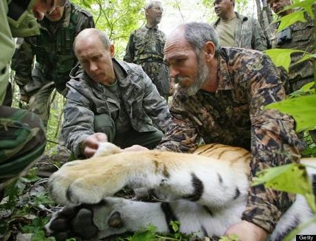 Cat eating dog making news .... Putin's Siberian Tiger returns to Russia