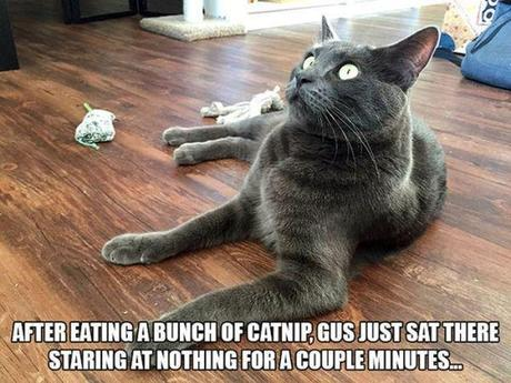 Funny Cats Who Just Got High On Catnip!