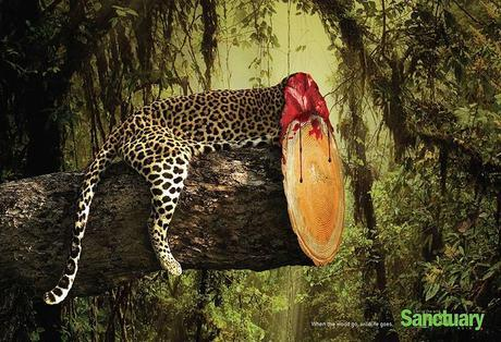 These Powerful Photographs Effectively Portray The Results Of Deforestation