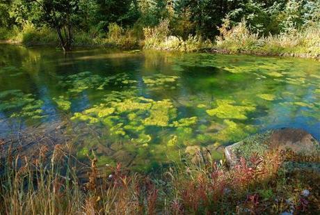 Study eyes 'pond scum' environmental feedback loop