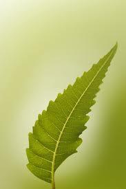 NEEM- The magic leaf