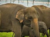 Where Best Place Lanka Elephants?