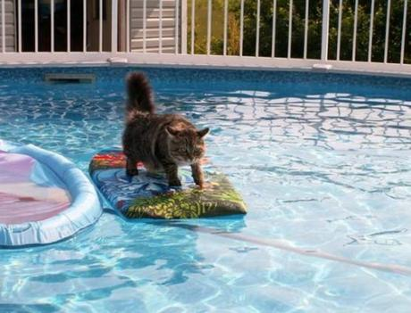 Top 10 Amazing Images of Surfing Cats