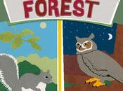 BOOK: NIGHT FOREST, Written Illustrated Caroline Arnold