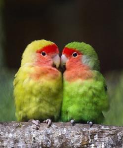 Colorful Birds In Love