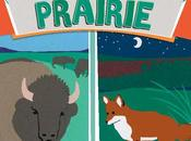 BOOK: NIGHT PRAIRIE, Written Illustrated Caroline Arnold