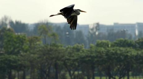 How Singapore makes biodiversity an important part of urban life   Citiscope