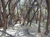 Beetle Bird: Expert Panel Weighs Biocontrol Invasive Tamarisk Trees
