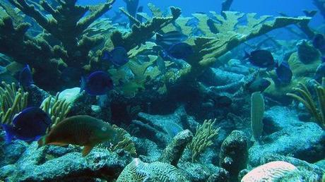 Something really, really terrible is about to happen to our coral
