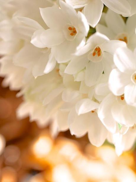 Paperwhite-and-Hydrangea-Arrangement