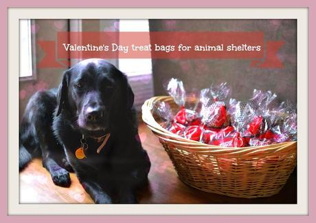 Valentine's Day treats for local animal shelters