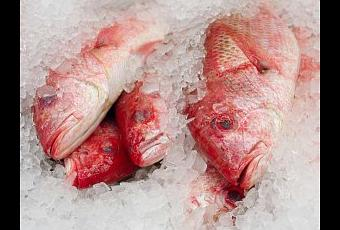 What is fish poisoning and how can you avoid it paperblog for Raw fish food poisoning