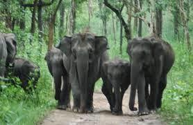 attractions of wayanad