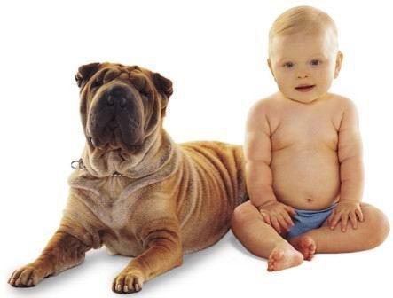 kids & dogs2