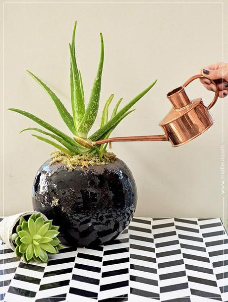 1 Product Styled 3 Ways: Rustic Plant Pot