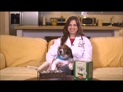Pet Dental Health Month: Veterinarian demonstrates 3 step dog dental routine