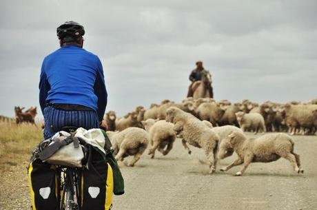 Mike cycling into the sheep.
