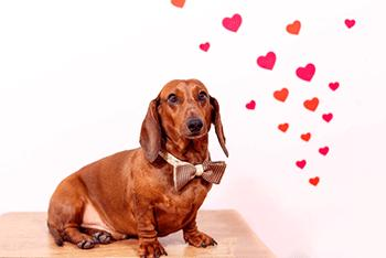 "Enter Petbrosia's ""Love My Pet"" Contest! #ilovemypet"