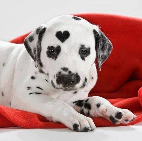 Top 10 Images of Dogs With Fur Hearts