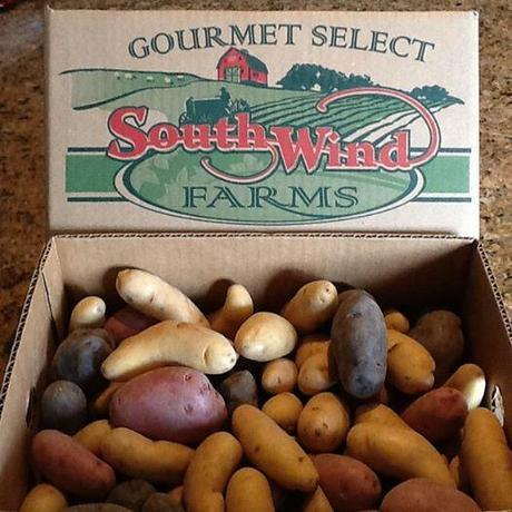Southwind Farms fingerlings
