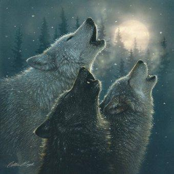 Canada:  Takes No Action Against The Logging Industry; Instead Blames and Kills The Wolves !!  Summary – Logging Makes Money – Wolves Do Not.