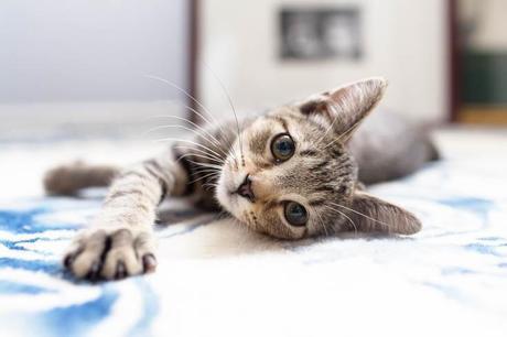 cat-mom-1