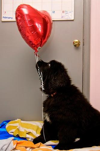 Photos: Valentine's Day goes to the dogs
